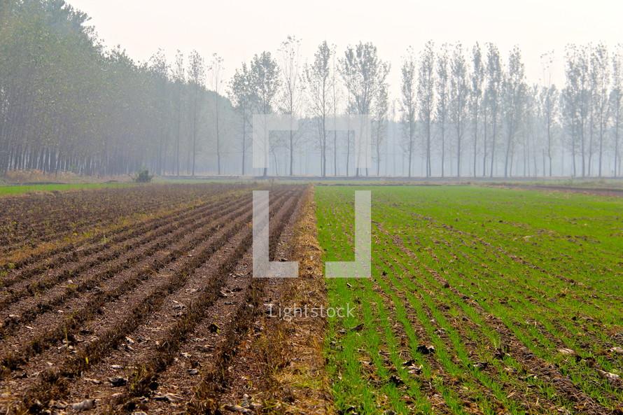 Misty sky over half plowed, half sown field