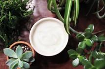 mug and house plants