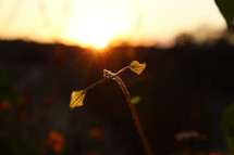 sunlight on sprouting leaves