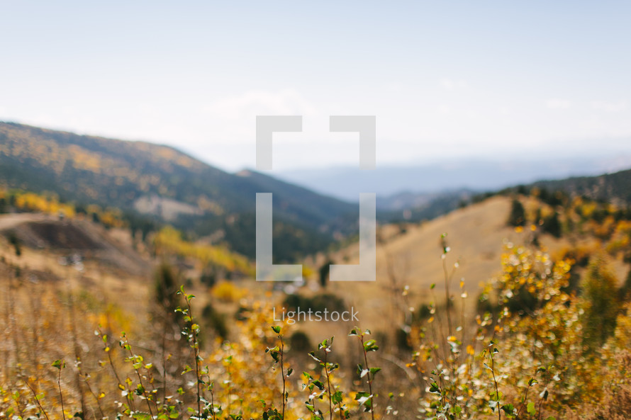 a mountain scene with tall fall grasses
