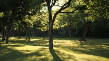 green grass under trees at a park