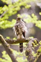Bird perched on a tree limb.