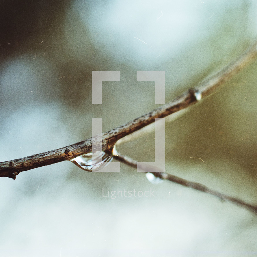 wet twig
