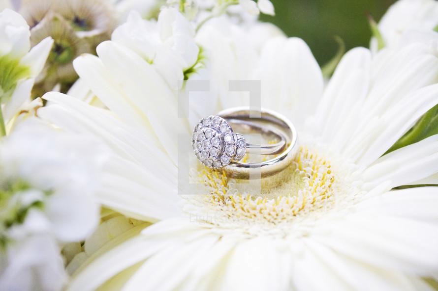 wedding rings on a gerber daisy