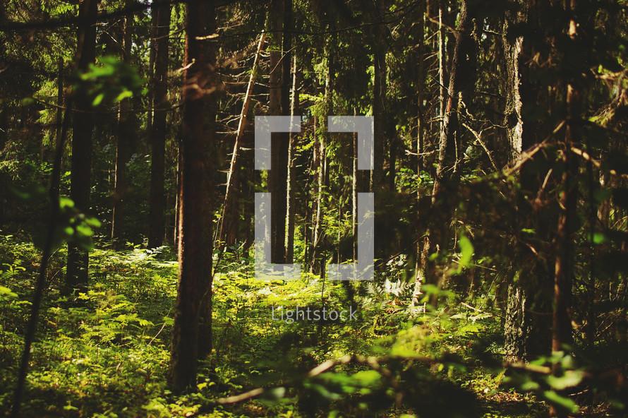 sunlight shining on ferns on a forest floor