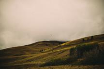 green grass on hills