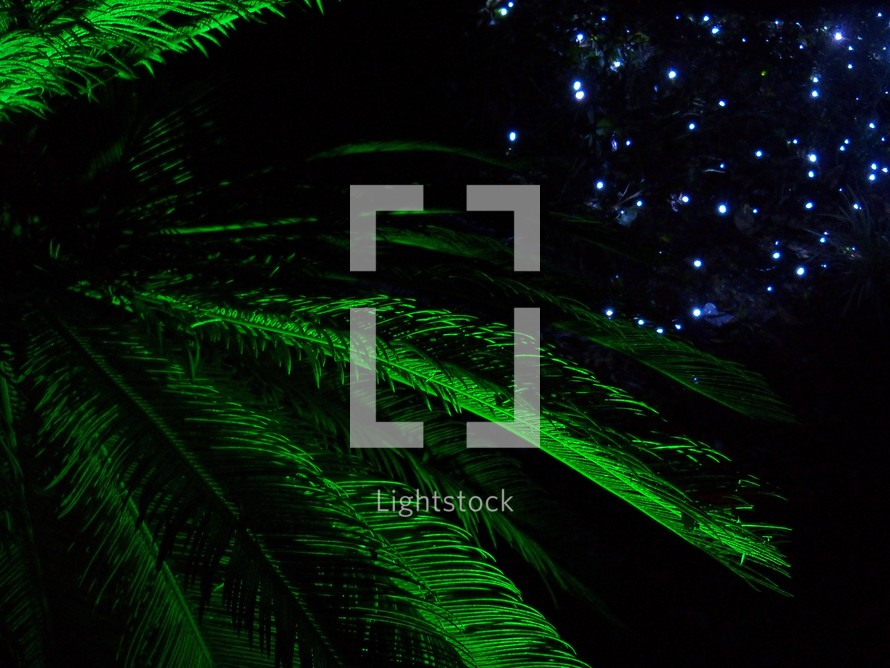 palm fronds and christmas lights a tropical christmas display of lighted green palm fronds and