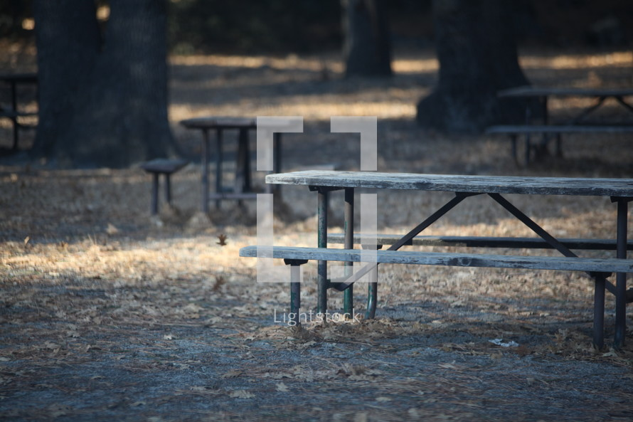 fallen leaves and picnic tables