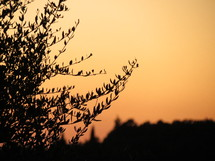 Silhouette of leaves on a tree.