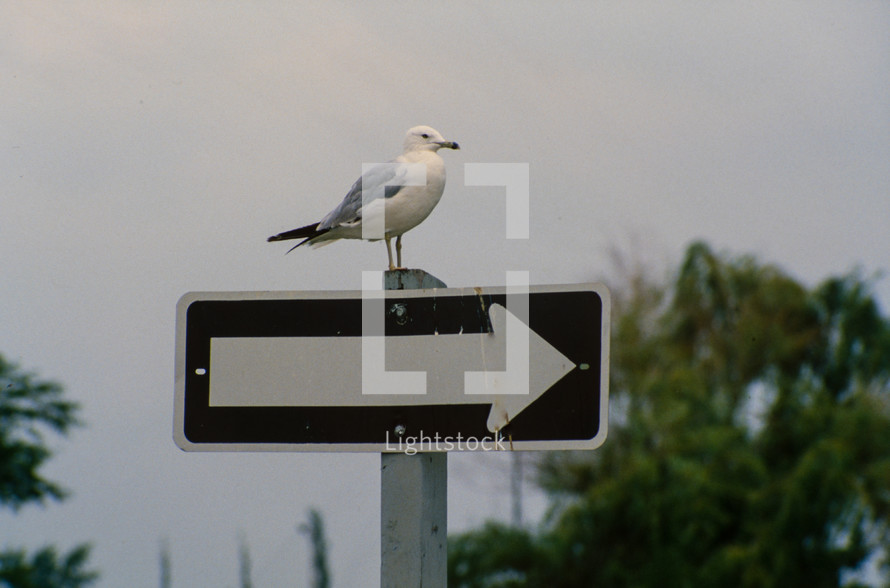 seagull on a street sign