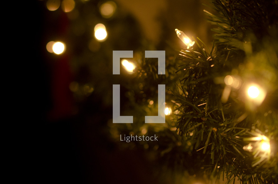 Clear Christmas lights on pine needles.
