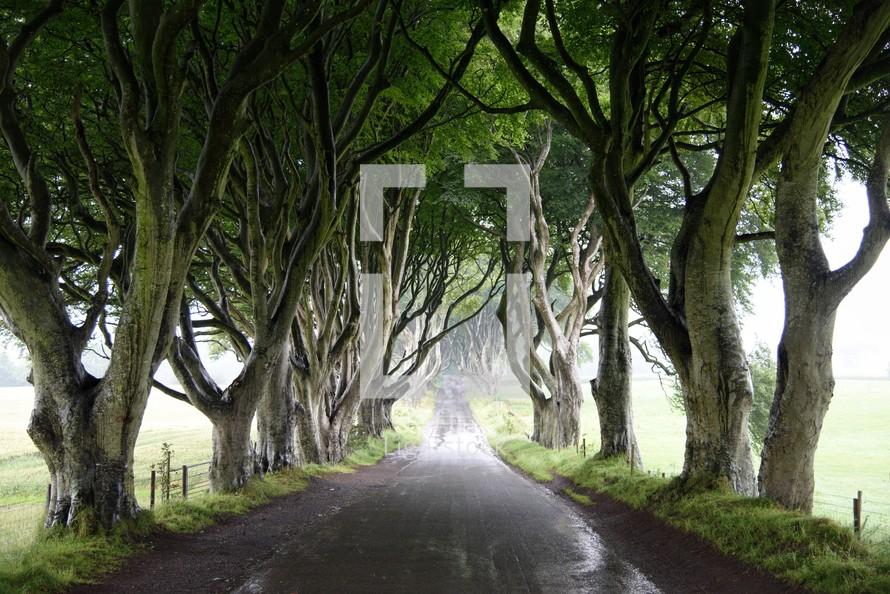 rural tree line road