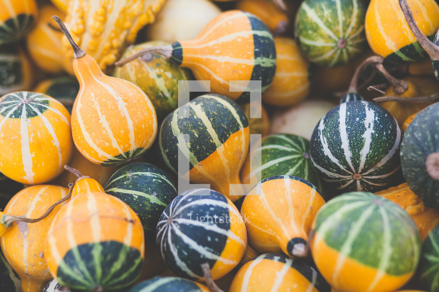pile of fall gourds
