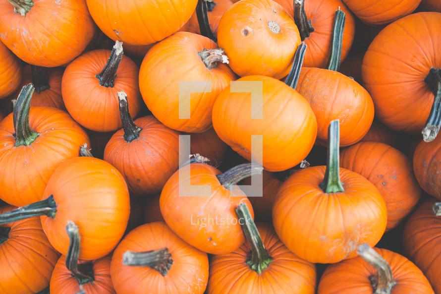 pile of small orange pumpkins