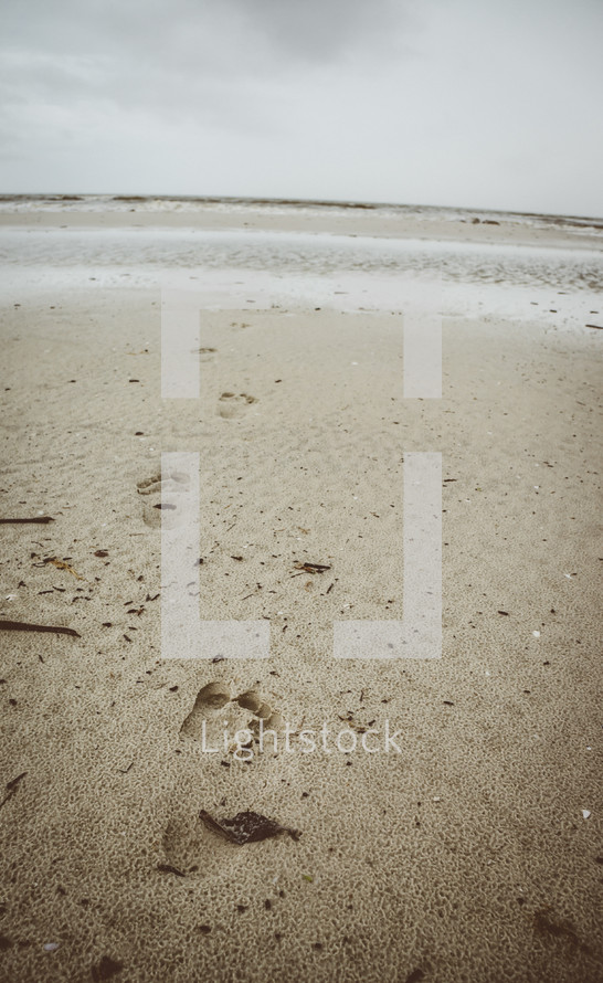 footprints in the sand on a beach