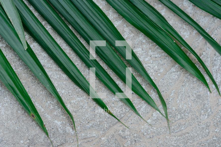 palm leaf on concrete