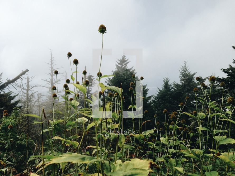 fog and dried wildflowers