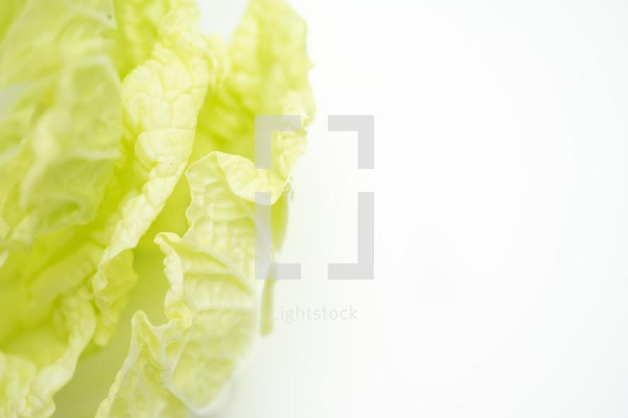 green leafy lettuce