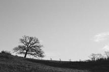 Single Tree, Black & White
