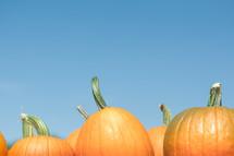 Selection of pumpkins