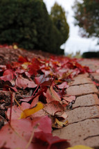red fall leaves on the ground