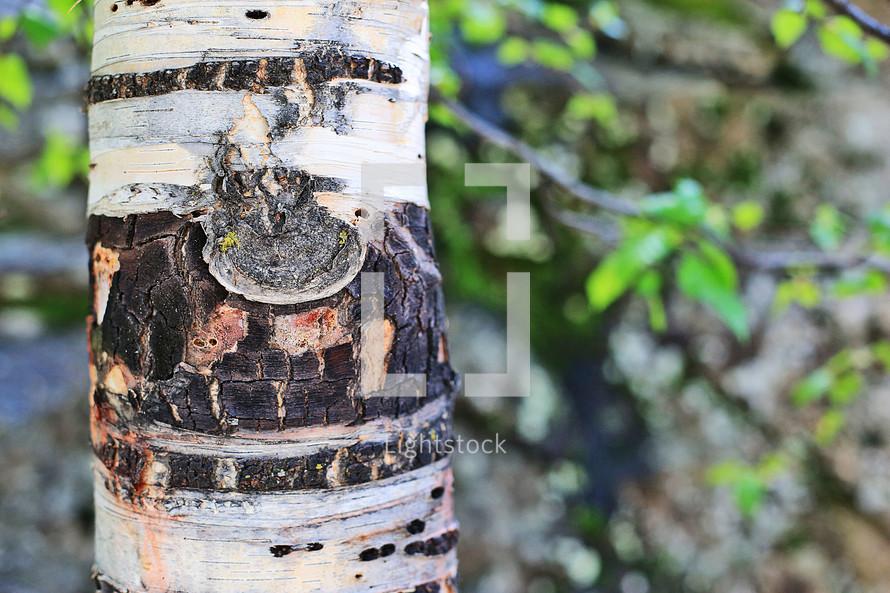 summer tree trunk