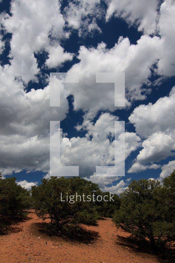 clouds in the blue sky and trees growing on a hillside