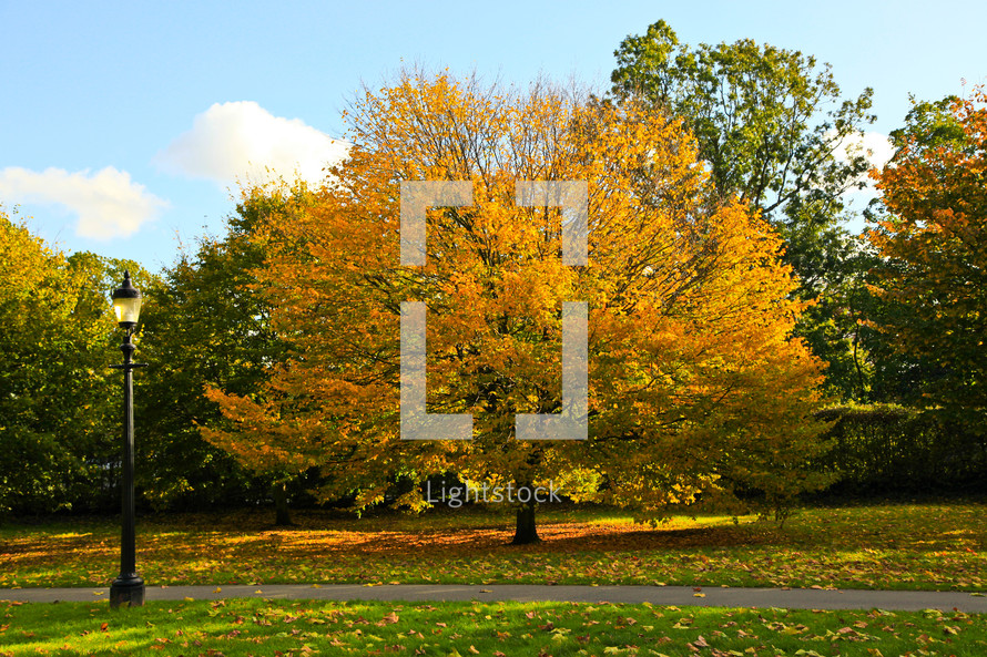A lamppost near a walkway and trees in autumn.