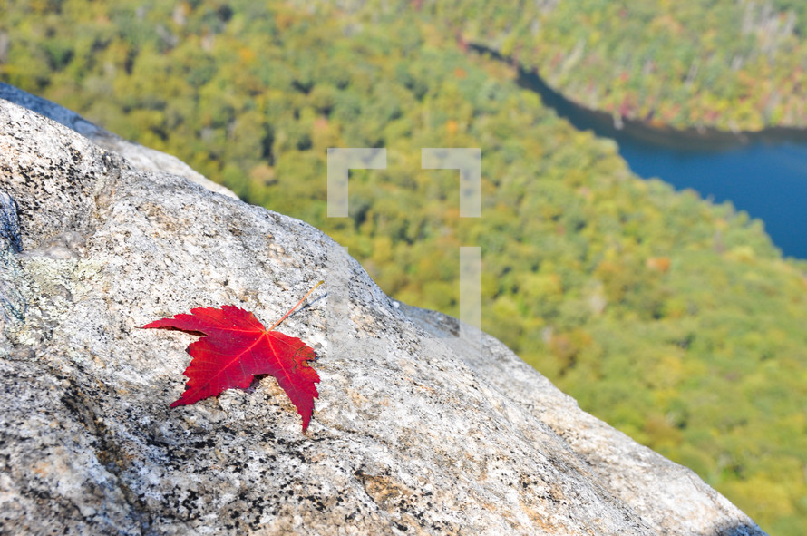 Red leaf on mountaintop