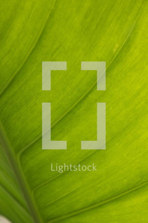 Green plant leaf