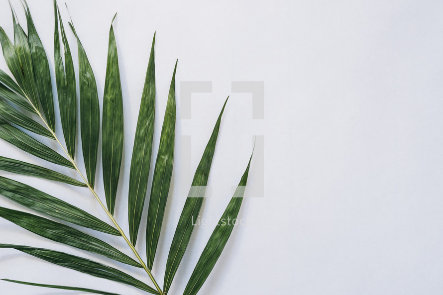 palm fronds, Palm Sunday, negative space, background