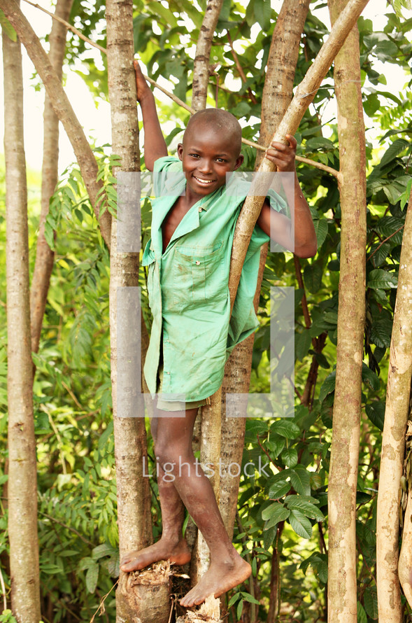 A young boy in a tree