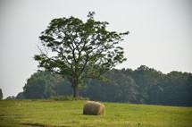Hay roll in field