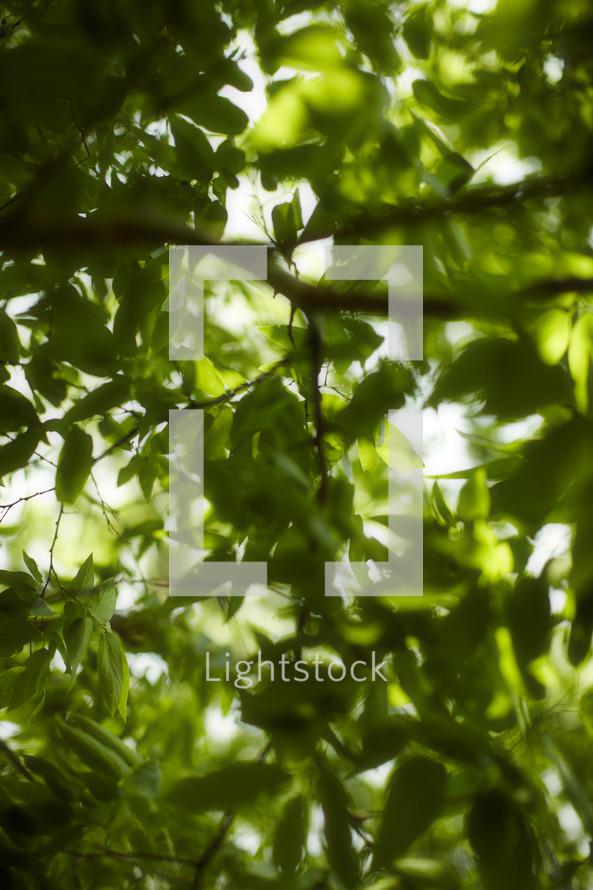 Light shining through green tree leaves