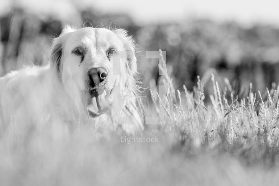 A dog in the grass.