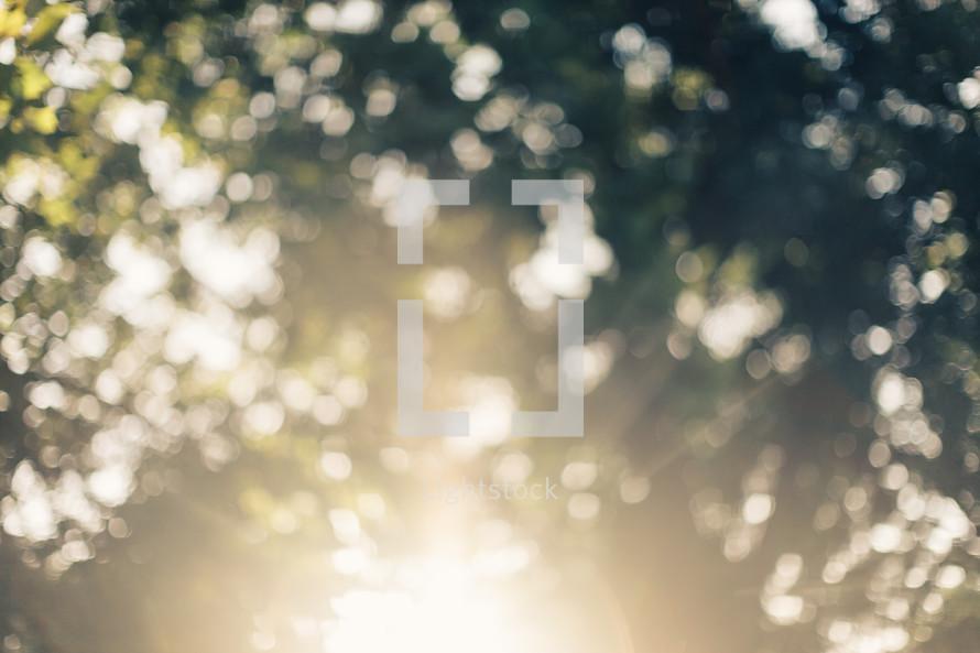 sunlight shining through a tree