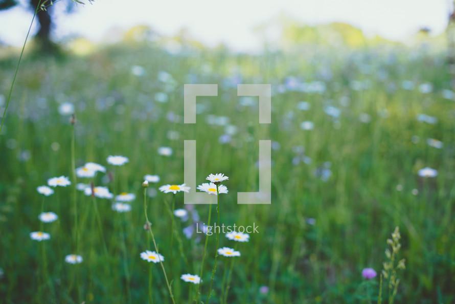 meadow of spring wildflowers