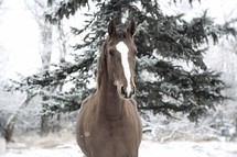a horse outdoors in snow