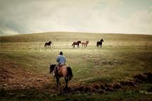 a cowboy herding horses