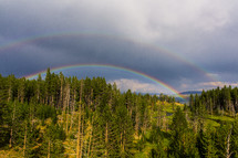 Double rainbow over the treetops.
