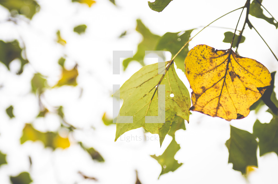 green and yellow leaves on a tree