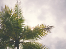 palm tree under a cloudy sky