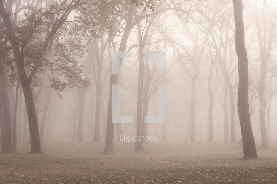 foggy and misty forest
