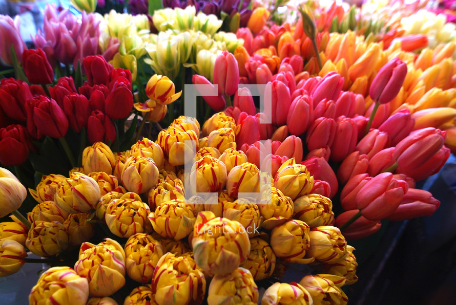 tulips at a flower stand