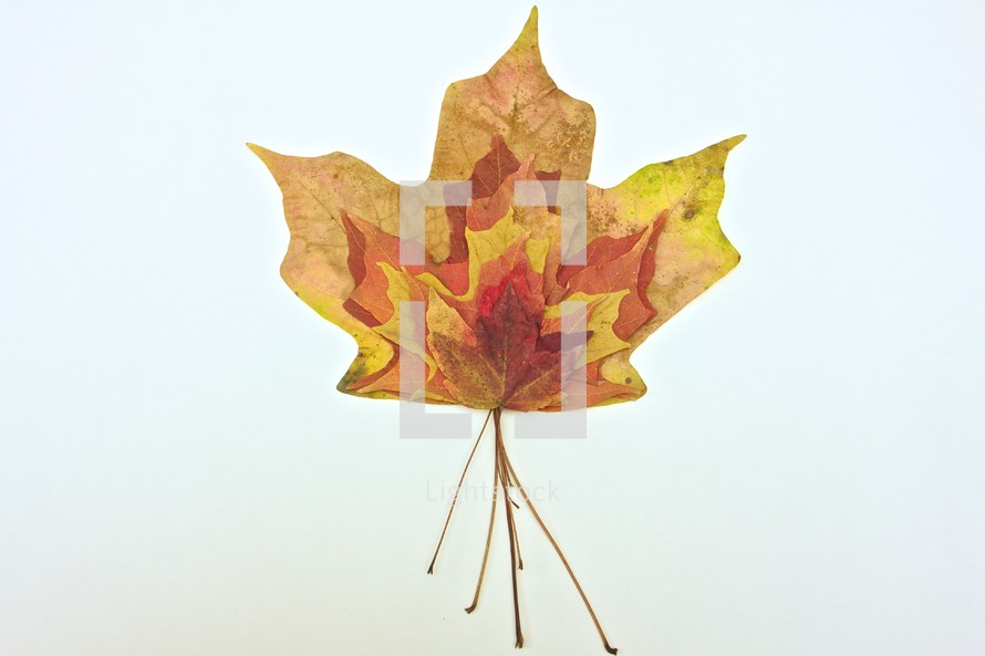 various sized fall maple leaves stacked