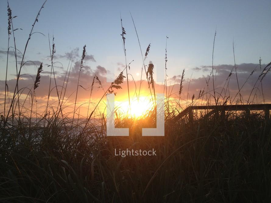 Sunset over a grassy beach