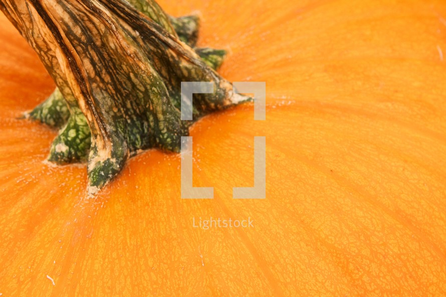 Closeup of a pumpkin