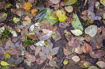 wet fall leaves in mud
