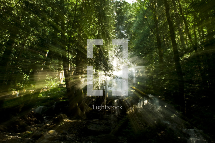 sunlight shinning through a forest