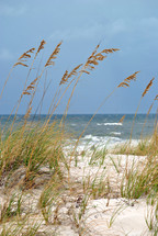 Sea oats edge the beach.